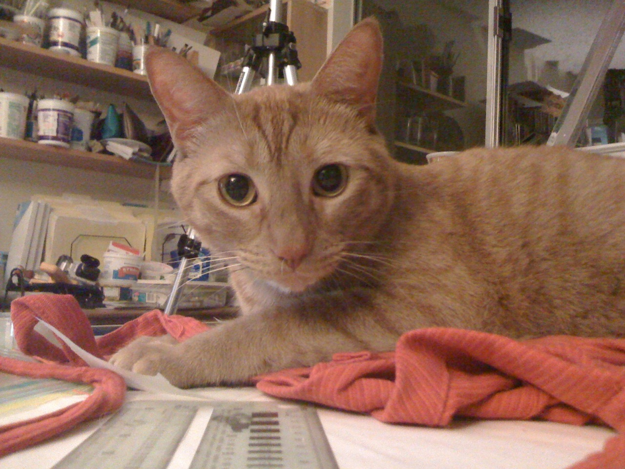 Louis the Cat takes over the drafting table