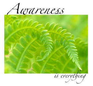 Awareness is Everything - ©Kim Manley Ort
