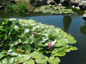 Koi pond at Presentation Center
