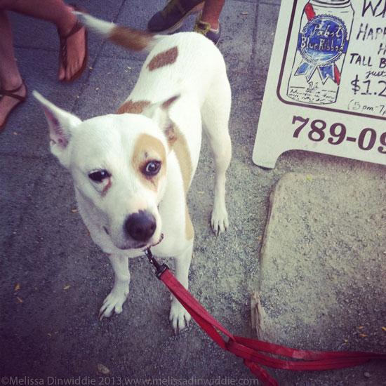 Blue Ribbon Dog