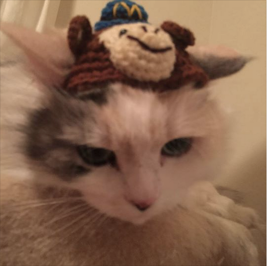 Nika in her MailChimp hat!